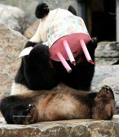 Panda eats cake
