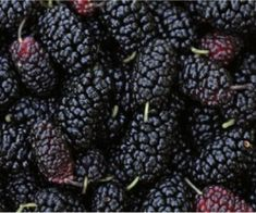Have you been using mulberries? Italian Recipes, Vegan Recipes, Preserving Food, Chutney, Biscotti, Food And Drink, Canning, Gem, Desserts