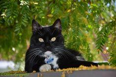 My Cat ... Clio ...