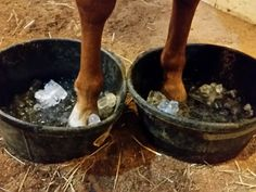 How to catch laminitis early - and save your horse a ton of suffering… Horse Information, Horse Care Tips, Horse Anatomy, Horse Facts, Horse Training Tips, All About Horses, Horse Grooming, Horse Stables, My Horse