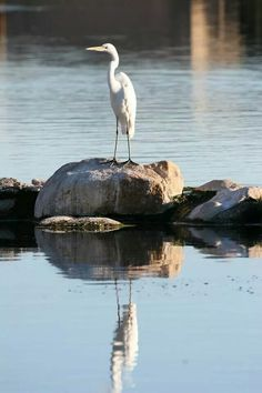Standing Alone (Photo by Tina Nilsen)