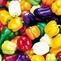 Multi Colours Sweet Pepper Heirloom Organic Flavor Vegetable Fruit 20 Seeds - US$1.49 sold out - Banggood Mobile