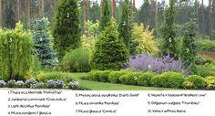 Conifer design in landscape//KBN049.jpg photo by onlymyflo