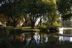 Autumn Utrecht reflection water colors tree