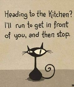 Cute Cat Quotes, Funny Animal Quotes, Crazy Cat Lady, Crazy Cats, Black Cat Humor, Cute Cartoon Drawings, Puppies And Kitties, Siamese Cats, Cat Life