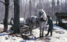2014 Maple Festivals and Events in New England