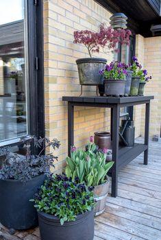 Outdoor Life, Outdoor Spaces, Outdoor Living, Farm Gardens, Outdoor Gardens, Belmont House, Japanese Garden Design, Wood Planters, Garden Inspiration