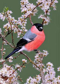 Птаха весной