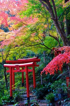Autumn scenery Japan