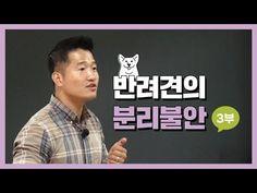 3부|반려견의 분리불안 세미나|보듬교육 - YouTube Pets, Youtube, Youtubers, Youtube Movies, Animals And Pets