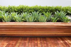 Cool Planter Boxes mode Perth Contemporary Landscape Inspiration with built-in bench deck decking geometric hedge linear mass planting minimalist planters succulents texture wood