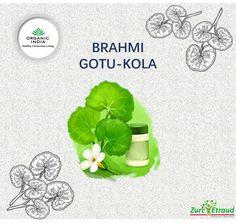 Brahmi Gotu-Kola BIO (Centella asiatica) Ajuda a manter uma boa função cognitiva e uma boa circulação venosa. #zurcetraud #organicindiaemportugal #zurcetraudbio