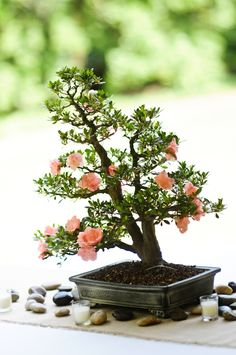Bonsai tree wedding centerpiece