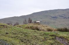 The Lost Sheep by Fergal of Claddagh, via Flickr