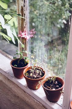 Photo Journal: Sweden The Future Kept - Terracotta plant pots on the window sill Potted Plants, Indoor Plants, Terracotta Plant Pots, Design Jardin, Ivy House, Foto Art, Window Sill, Window Ledge, Horticulture