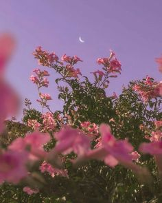 Nature Aesthetic, Flower Aesthetic, Aesthetic Images, Aesthetic Collage, Purple Aesthetic, Aesthetic Backgrounds, Aesthetic Iphone Wallpaper, Aesthetic Photo, Aesthetic Wallpapers