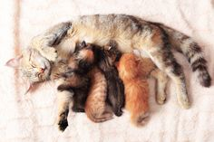 Feline Pregnancy: How To Care For A Pregnant Cat