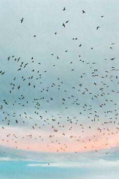 Seagulls Feeding.