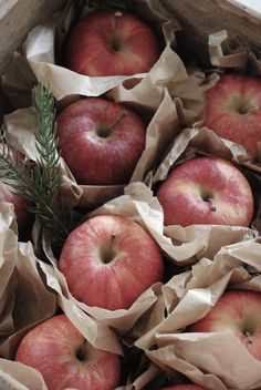 Swedish Christmas: Paper wrapped apples set in a wooden crate with sprigs of pine.