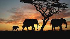 Elephants, savanna, sunset, silhouette of elephants, Africa Elephant Family, Elephant Art, Cute Elephant, African Elephant, African Safari, African Art, Tattoo Elephant, Colorful Elephant, Elephant Wallpaper
