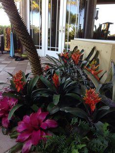 Bromeliad garden design