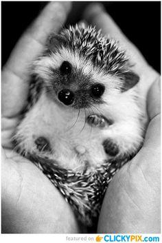 Adorably Cute Tiny Animals