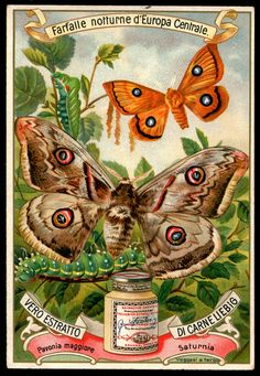 """Liebig's Beef Extract  """"Moths of Central Europe"""" 5 Italian issue, 1898"""