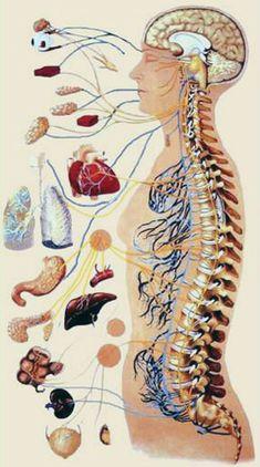tüdő   Kínai-medicina Medicine