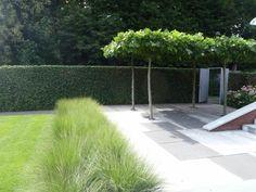 Love Garden, Dream Garden, Lawn And Garden, Side Yard Landscaping, Outdoor Landscaping, Garden Images, Garden Photos, House Landscape, Landscape Design