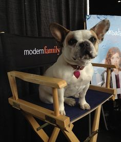 We LOVE Modern Family's canine star, Stella! #modernfamily #pets