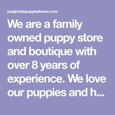 We are a family owned puppy store and boutique with over 8 years of experience. We love our puppies and have a wide selection of Purebreds! Our puppies are loved from birth from our hand selected breeders, many of whom have been with us for over a long time. Shorkie Puppies, Yorkie Puppy, Tiny Puppies For Sale, Seven Pounds, Puppy Store, Purebred Dogs, Little Dogs, Yorkshire Terrier, Birth