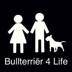 bull terrier for life!
