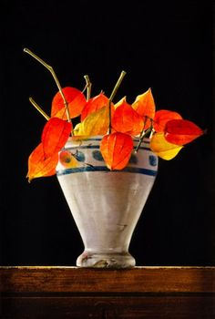Chinese Lanterns in vase ~CK Contemporary Still Life Flowers, Still Life Fruit, Chinese Lanterns Plant, Paper Plants, Still Life Oil Painting, Fruit Painting, Still Life Photography, Flower Art, Plant Leaves
