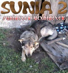 Sunia 2: suniaczek uczniaczek
