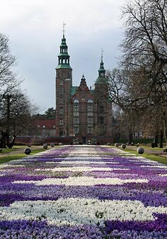 Crocus flowers, Kings Garden at Rosenborg Castle in Copenhagen