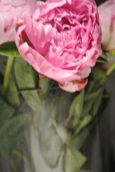 Rose, Flowers, Plants, Floral, Roses, Plant, Royal Icing Flowers, Florals, Flower
