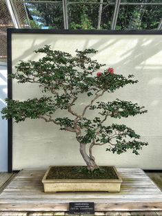 Longwood Gardens and the mythical Kennet Collection | Adam's Art and Bonsai Blog
