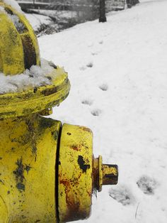 ACEO Fire Hydrant Photographic Print by Charlee M. Fischer. $7.50, via Etsy.