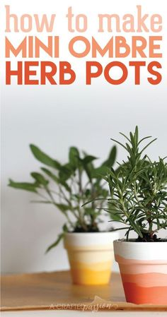 Make a set of these mini ombre herb pots for under $5! A fun DIY craft idea to do with the family.