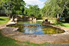 KNP - Punda Maria - Pool