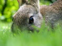 The benefits of rabbit manure in the garden!w