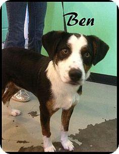 New Tazewell, TN - Border Collie/Husky Mix. Meet Ben a Dog for Adoption.