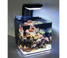 A 30 litre / 6.6 gallon high quality acrylic microhabitat with a built in filtration system, this offers low cost entry into marine keeping. With an AquaRay MiniLED Light included, which is perfect for Coral growth, offering high intensity lighting, with moonlight setting but is also cheap to run. 600 lph integral pump, integrated skimmer and an H20 Air60 Air Pump included. Condensation lid included to prevent water loss from evaporation.