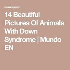 14 Beautiful Pictures Of Animals With Down Syndrome | Mundo EN