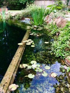 Photo Gallery of Natural Swimming Pool/Ponds, designed/built by Total Habitat Swimming Pool Pond, Natural Swimming Ponds, Backyard Pool Designs, Backyard Pools, Pool Decks, Patio Gazebo, Dream Pools, Garden Pool, Outdoor Landscaping