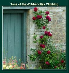 Tess of the D'Urbervilles Quotes | Tess Of The d'Urbervilles - Climbing