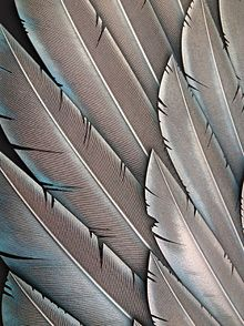 metal feather - Google Search