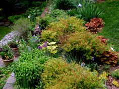 THAT HEUCHERA IN THE BACK LOOKS AWESOME NEXT TO THE IRIS   main perennial border at Carolyn's Shade Gardens