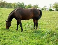Horse Temperament: Does Your Earth Horse Get A Swollen Sheath?