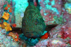 colorful fish near cano island  - Costa Rica